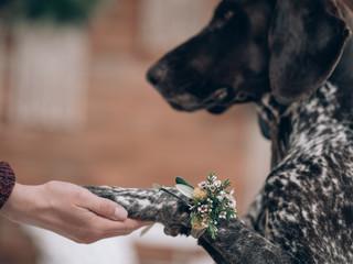 Dog at wedding, wearing flower decor