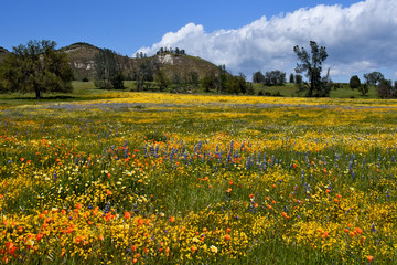 Wildflower covered meadow