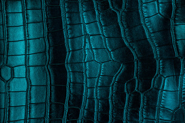 Wall Mural - Blue crocodile leather texture, as background.