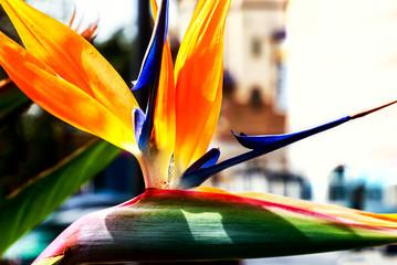 Bird of paradise, exotic strelitzia