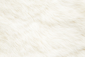 Light, white, furry coat background. Empty place for text, quote or sayings. Top view. Closeup.