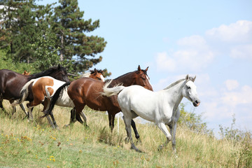 Fototapete - Amazing batch of horses on pasturage