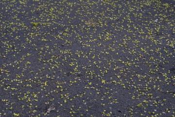 Asphalt during spring season