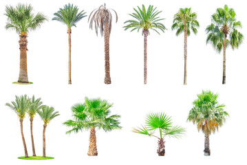 Collection of palm trees isolated