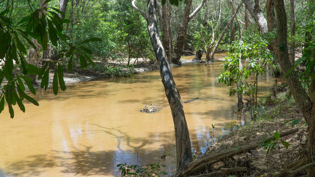 Bank of dangerous South Alligator River in Kakadu National Park, Australia