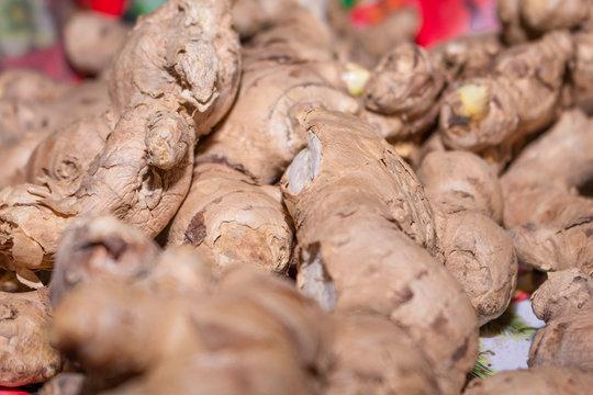 Ginger spice root - Zingiber officinale