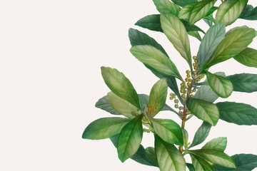 Botanical themed design space Wall mural