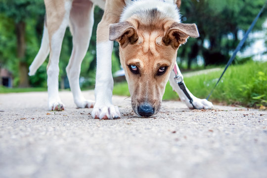 Cute young dog sniffing the sidewalk looking at the camera