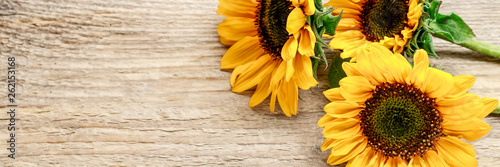Wall mural Sunflowers on wooden background.