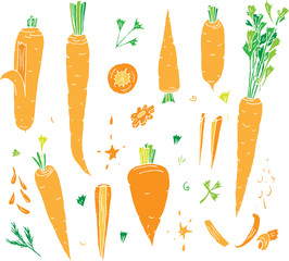 Set of isolated carrot vector elements on transparent background