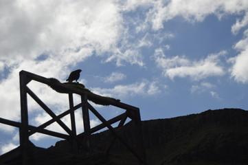 Sombra de halcón