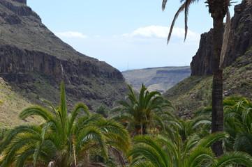 Valle oasis