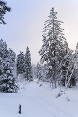 Footpath in a winter landscape in Harz mountains national park