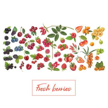 Fresh berries hand drawn vector illustration