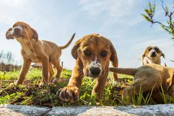 little sweet puppies play on green grass. dogs play, lie, stand and jump on the grass of the yard. Wall mural