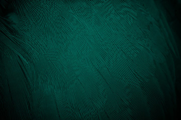 Wall Mural - Beautiful dark green florida keys colors tone feather texture background,trends color