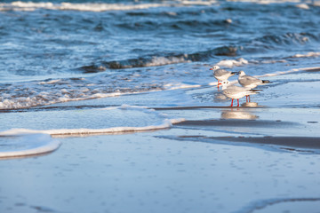 Sea and Birds Text Space Background / Group of seagulls at shore of baltic sea (copy space)
