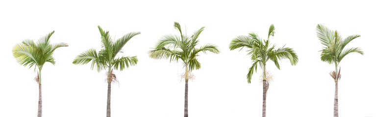 A row of Palm trees isolated on white background Wall mural