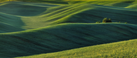 hilly field. picturesque hills. abstract spring field Wall mural