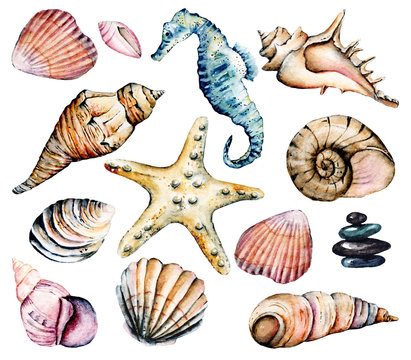 Seashells set, marine scenery. Watercolor seahorse, starfish and other shells. Travel, beach design isolated on white background. Hand drawing.