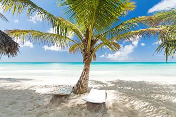 Beach scene with sunbeds under coconut palms