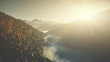Mountain Landscape Scenery Low Fog Aerial View. Steep Rocky Gorge Pine Forest Slope Overview. Wild Habitat Tranquil Atmosphere Eco Friendly Environment Concept Drone Flight