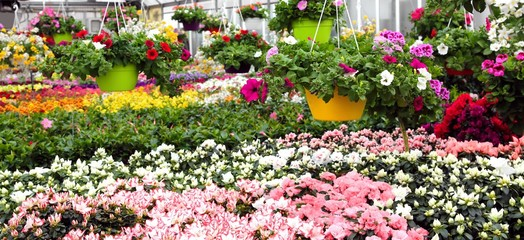greenhouse with beautiful flowers and plants for sale