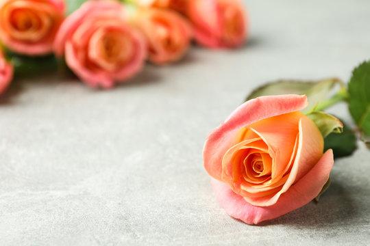 Fresh orange roses on grey background, closeup