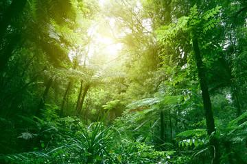 Fotobehang Bossen Canopy of jungle