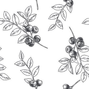 Vector vintage seamless floral pattern with blueberry isolated on white. Hand drawn botanical texture with forest berries in engraving style.