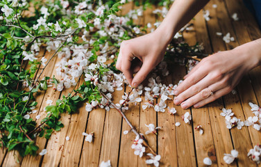 Romantic DIY composition. Women's hands gently touch the white apricot flowers, which lie on a brown wooden table. The concept of florist and needlework.
