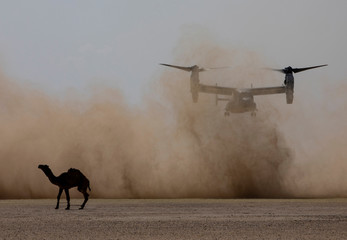 A U.S. Marine MV-22 Osprey with the 22nd Marine Expeditionary Unit lands before offloading Marines and Sailors as part of embassy reinforcement training during an exercise at Camp Beuhring, Kuwait