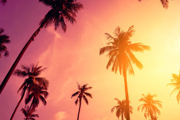 Wall Mural - Tropical palm tree with colorful bokeh sun light on sunset sky cloud abstract background.