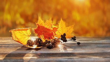 autumn leaves in sunshine. beautiful autumn composition. maple leaves and cones on rustic wood background. fall season concept. Autumn mood background. copy space, soft selective focus