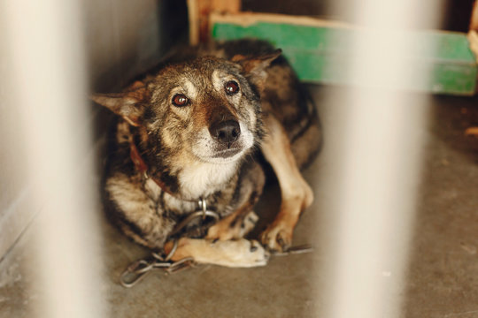 scared dog in shelter cage with sad crying eyes , emotional moment, adopt me concept, space for text.
