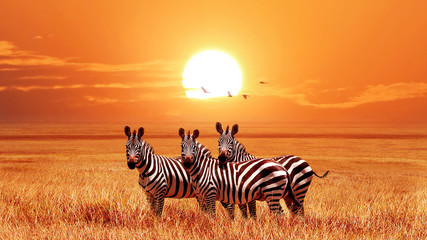 Poster Zebra African zebras at beautiful orange sunset in the Serengeti National Park. Tanzania. Wild nature of Africa.