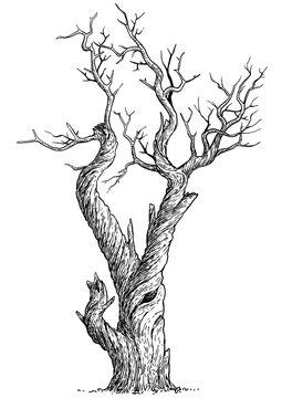 Dead tree illustration, drawing, engraving, ink, line art, vector