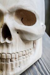 Photography of wooden white skull