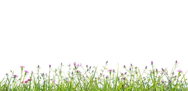 grass and wildflowers isolated background