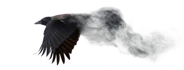 dark crow flying from smoke isolated on white Wall mural