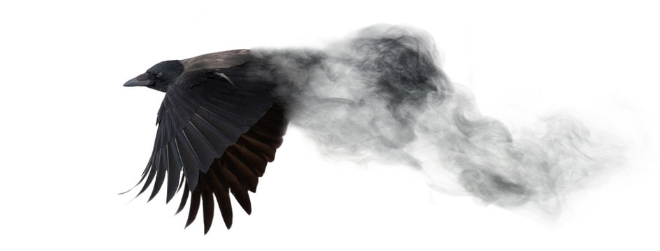 dark crow flying from smoke isolated on white