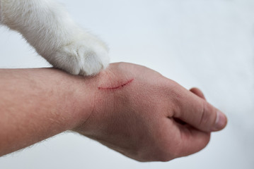 Scratch on a man's hand made by a cat, a cat's paw on a hand of an owner on a white background