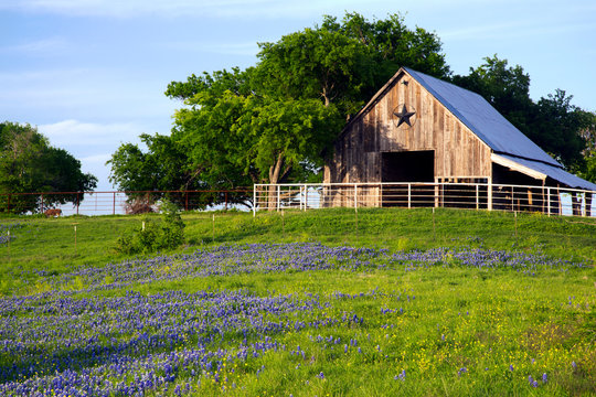 Barn and Bluebonnets