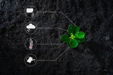 Flat lay of young growing plant with icon of watering shower, fertiliser, thermometer and raincloud for planting technology concept