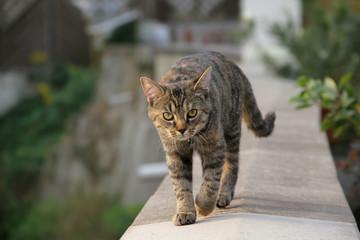 Katze Kitten mit Glöckchen läuft auf Mauer