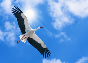 weißer Storch fliegt unter der Sonne am blauen Himmel