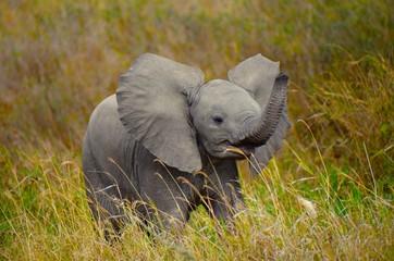 Baby elephant playfully swinging trunk