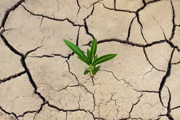 Cracked dry earth and a green lonely plant that breaks through the crack. Ecological and climatic problems