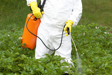 Herbicide spraying. Non-organic vegetables.