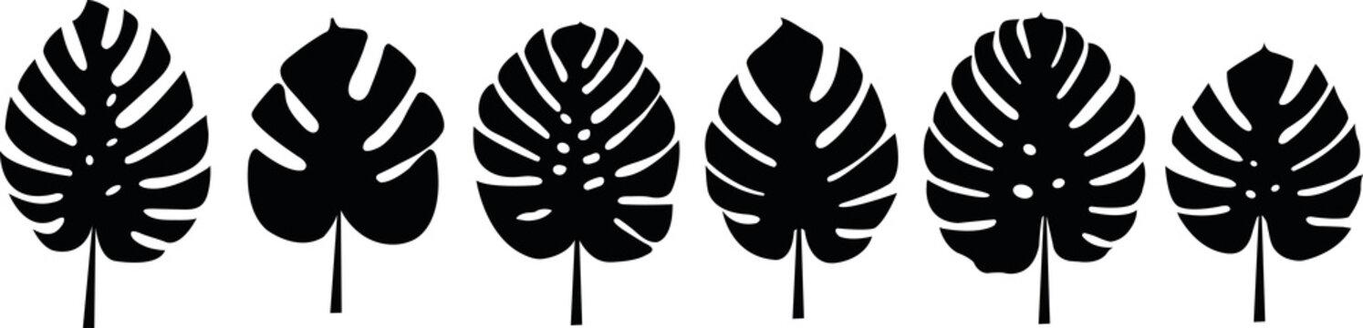 set of monstera deliciosa leafs